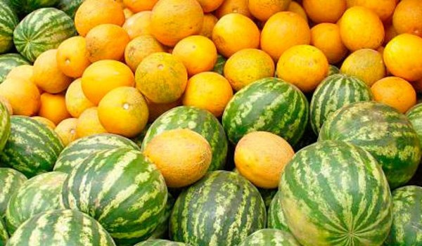Iran Exports Over $241mln of Cucurbits, Vegetables in 5 Months