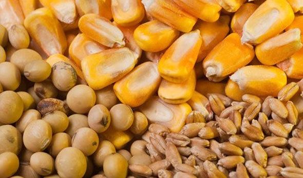مجلس واردات محصولات تراریخته را ممنوع کند/ قاچاق بذرهای تراریخته به کشور