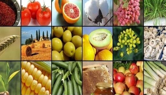 وضعیت افزایش قیمت کالاهای خوراکی